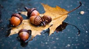 Autumn-leaf-acorn-water-ground_1600x900