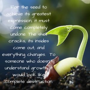 seed growth